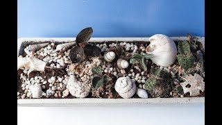Ep 023, Part 4: 670+ PLANTS HOUSEPLANT TOUR, Bathroom  (Summer 2017)