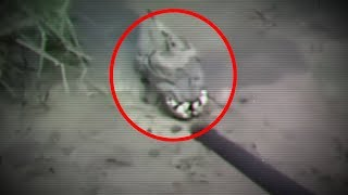 5 Mysterious Creatures Caught On Camera & Spotted In Real Life! #3