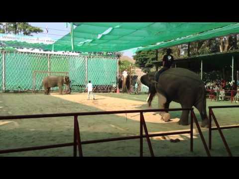 ช้างสุรินทร์เตะฟุตบอลอย่างเทพ