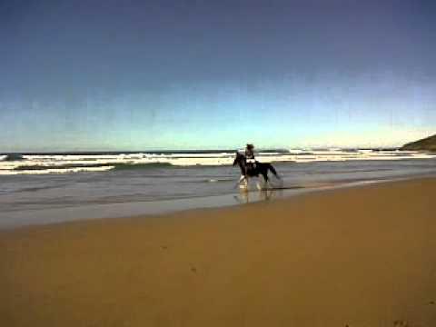 Xxx Mp4 Canter Down A Deserted Beach With Wild Coast Horse Trails 3GP 3gp Sex