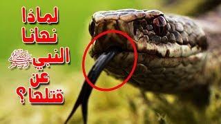 هل تعلم لماذا نهانا النبي ﷺ عن قتل الثعبان قبل إنذاره؟ إجابة ستدهشك