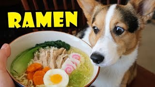 CORGI RAMEN - Homemade DOG Friendly DIY || Life After College: Ep. 567