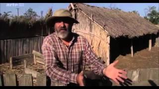 ☛☛ Chevaux sauvages de l'Europe - Roumanie ☚☚
