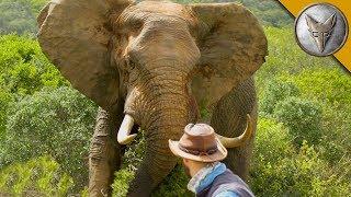 Man vs. Elephant!