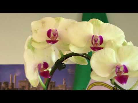 Xxx Mp4 How Care Orchid نهويه پرورش گل اركيده آموزش باغبانى با صابر 3gp Sex