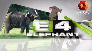 E4 Elephant