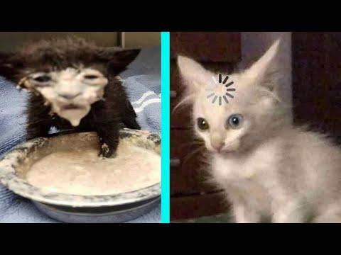 BEST DANK CAT MEMES COMPILATION OF 2020 PART 10 from TikTok