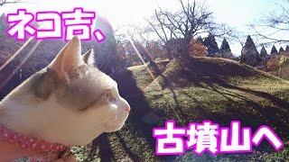 お散歩猫ネコ吉、古墳群の山々を制覇!