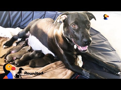 Xxx Mp4 Mother Dog Reunited With Her Puppies All Grown Up The Dodo Reunited 3gp Sex
