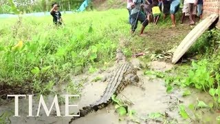Hundreds Of Crocodiles Slaughtered In Retaliation For Attack On A Villager In Indonesia | TIME