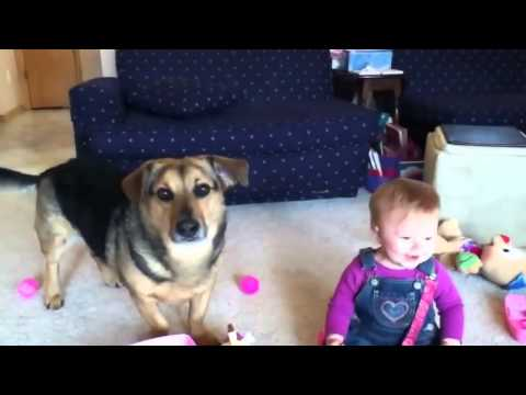 видео как смеется собака ловит