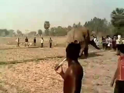 Xxx Mp4 Elephant Attack In Bankura 3gp Sex