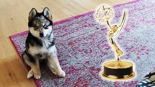 This Puppy Wants an Emmy!