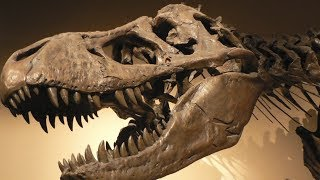 5 Biggest Dinosaur Mysteries That Have Never Been Solved!