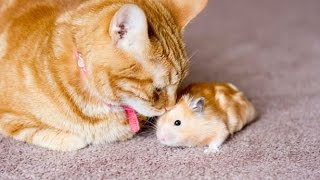 Persahabatan Kucing Dan Tikus Seindah Kisah Tom Dan Jery