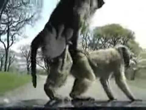 Monkey Fucks on a Car (Live)