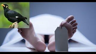 পোস্ট মরটেম কে কেন ময়না তদন্ত বলা হয় , ময়নার পাখির সাথে কি সম্পর্ক