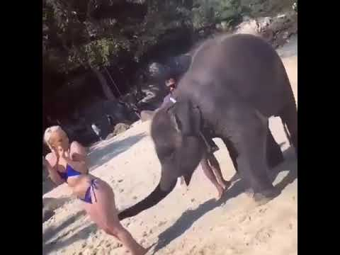 Elephant playing with girl ass butt anal