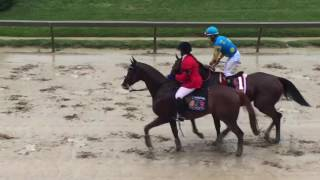 Preakness Stakes 2015