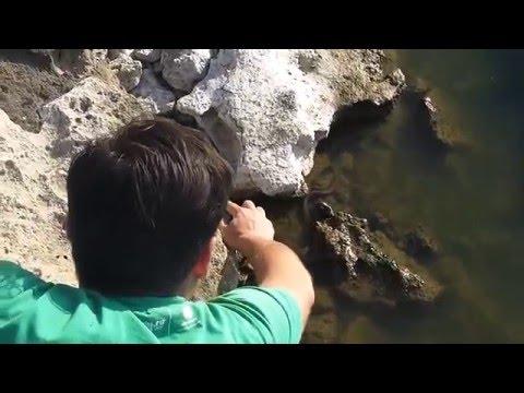 как ловить гадюку руками