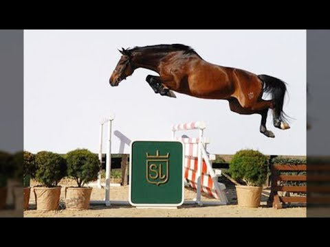 Funny And Cute horse horse jump fence #09