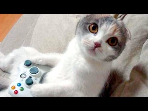 HARDEST CHALLENGE Try not to laugh or smile The BEST ANIMAL videos