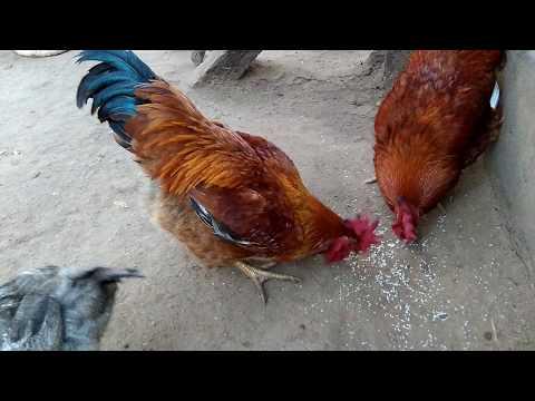 Xxx Mp4 Indian Hen 3gp Sex