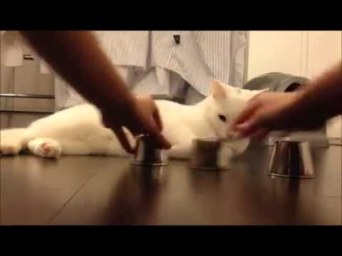 sexo cute cat  playing with a man Mirpur