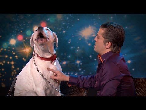 Dog sings Whitney Houston Belgium s Got Talent VTM