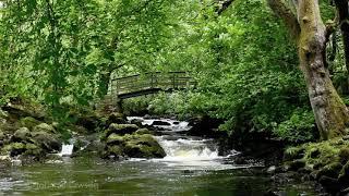3D LANDSCAPE-Relaxation Meditation-Nature Sounds-Flowing Water-Bird Song-Wood Sounds-3D River