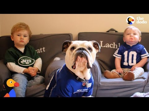 Xxx Mp4 Bulldog Is So Protective Of His Baby Brothers The Dodo 3gp Sex