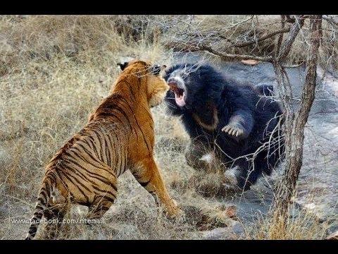 Xxx Mp4 Biggest Wild Animal Fights 3gp Sex