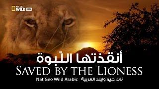 أنقذتها اللبوة | نات جيو وايلد العربية | Nat Geo Wild Arabic