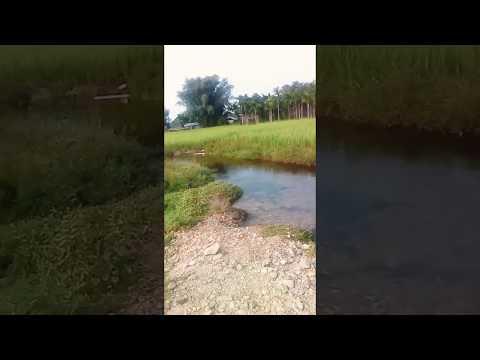 Xxx Mp4 New Video Bodo Funny Video 3gp Sex