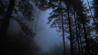 Virtual Drive Through The Dark and Foggy Forest / Rain and Thunder