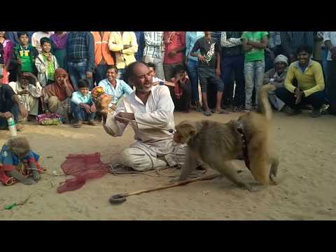monkey comedy funny video drama India ,Bandar aur bandariya ka khel, monkey street show,monkey dance