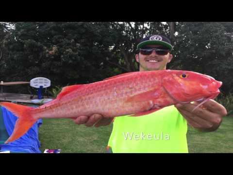 Spearfishing Maui 2017