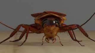 The Roach - 3D Model Test animation and render