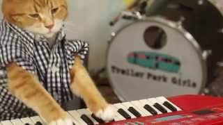 KEYBOARD CAT 96 TEARS
