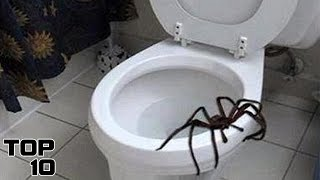 Top 10 Scariest Things Found In Your Toilet
