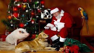 Saindo da Matrix RELOADED Parte 10 - O Paganismo do Natal - Fuja da Babilônia