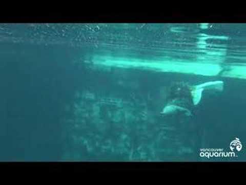 Beluga Birth