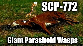 SCP-772 Giant Parasitoid Wasps | Object Class: Euclid | Parasitic scp / Species scp