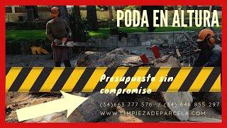 PODA+ALTURA+TALA+PINOS+PELIGROSOS+663 777 576+LLEIDA