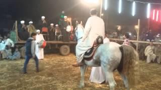 العمده علاء عفيفي حفله الاقصر بالحصان رونالدو