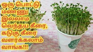 ஒரு பொட்டு மண்ணு இல்லாம வெந்தய கீரை, கடுகு கீரை வளர்க்கலாம் பாருங்க!!!making fenugreek plant