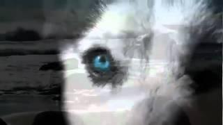 ar rahman new songs 2012.mp4