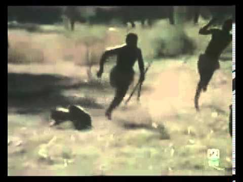 Cazando jabalíes con babuinos Hunting wild boar using monkeys