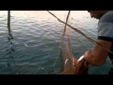 рыбалка на каспийского моря сезон когда