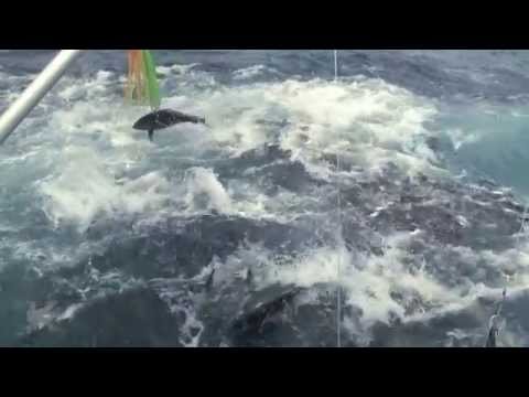 EPIC TUNA frenzy in Panama Underwater footage too
